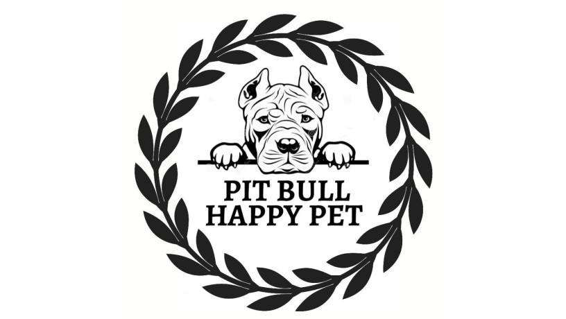 ventas-de-american-pitbull-terrierapbt-big-1