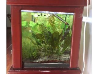 Vendo pescera con plantas naturales