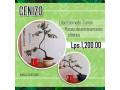 bonsai-shotokan-small-1