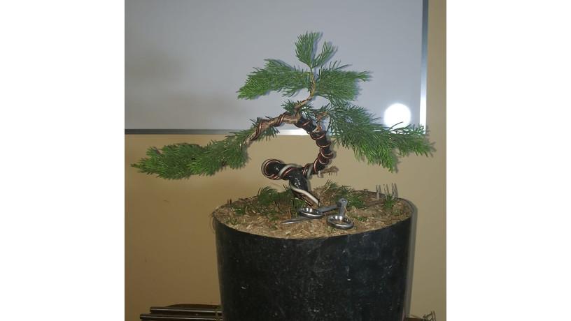 bonsai-shotokan-big-2