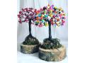 bonsai-small-5