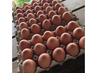 Huevos Orgánicos.