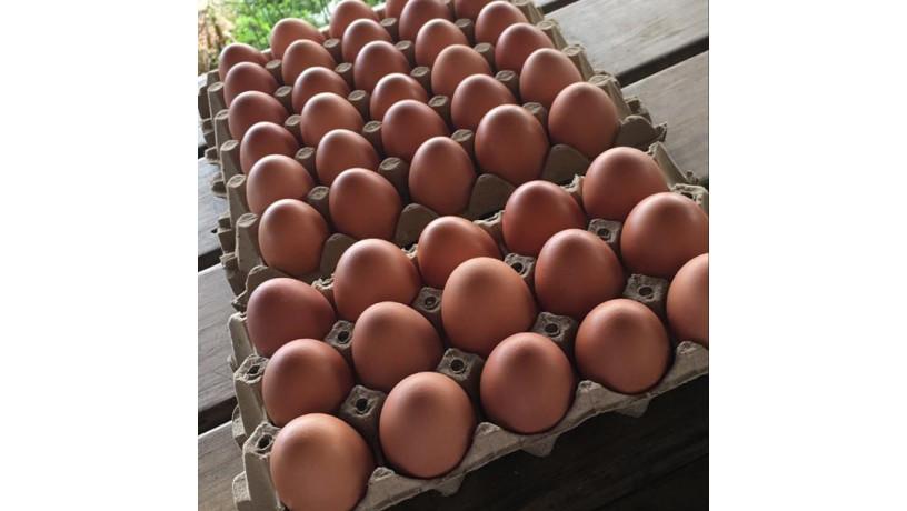 huevos-organicos-big-0