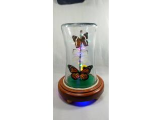 Lámparas con mariposas reales